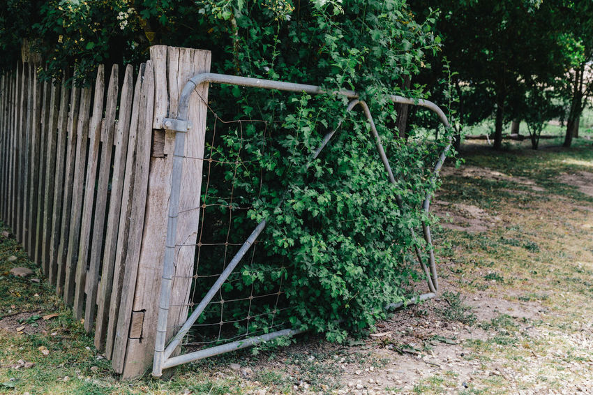 Agriculture Australia Day Farm Farm Fence Farming Fence Growth Nature No People Outdoors Plant Rural Tree