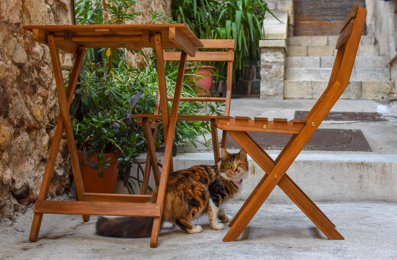 Cat looking away while sitting on chair