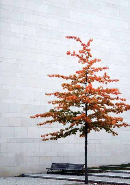 already Autumn Beauty In Nature Bench Branch Concrete Concrete Wall Day Empty Empty Places Fragility Gray Gray Day Growing Growth In Front Of Nature No People Orange Color Outdoors Red Single Tree Season