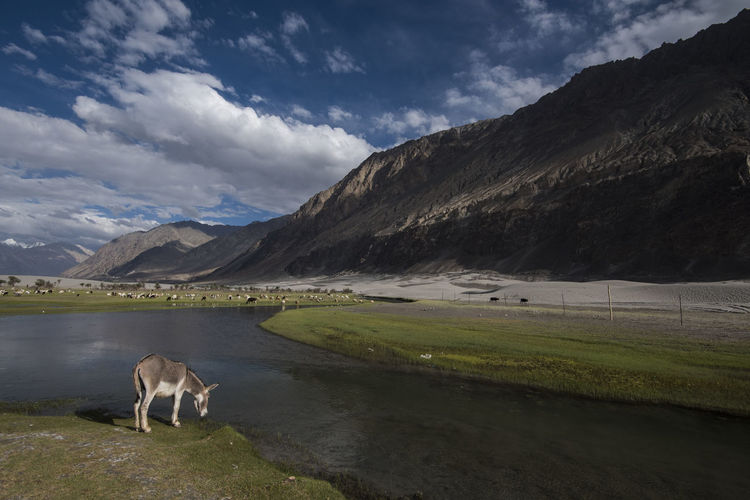 Donkey Grazing At Lake Against Sky