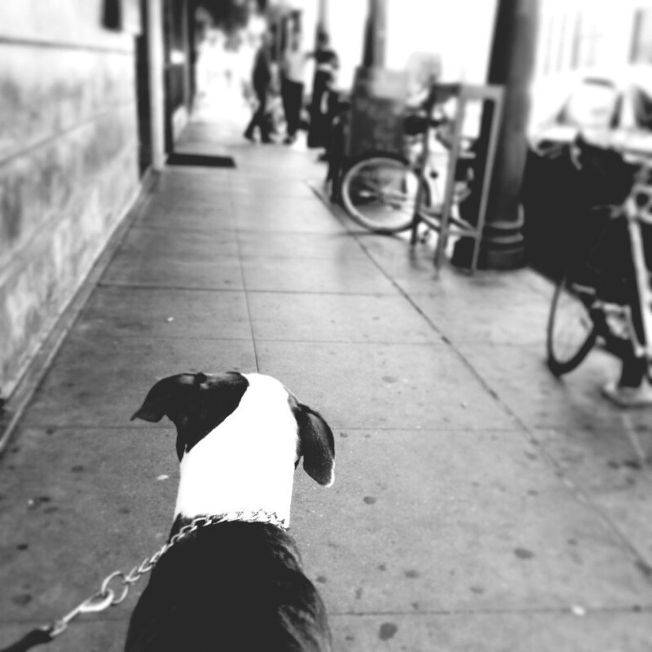 Dog walking on pavement
