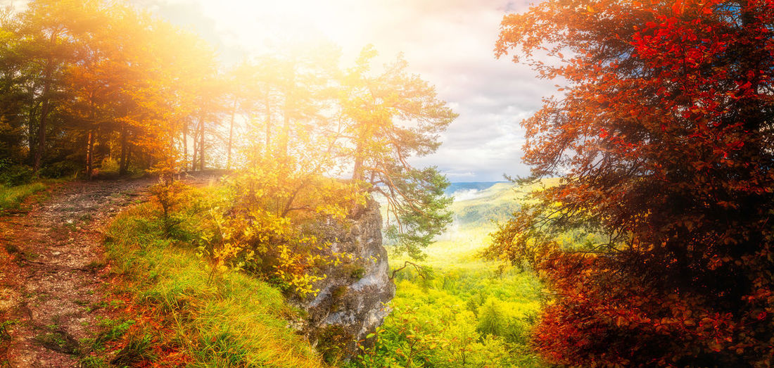 Autumn Beauty In Nature Change Day Forest Grass Growth Landscape Leaf Nature No People Orange Color Outdoors Scenics Sky Sunlight Sunset Tranquil Scene Tranquility Tree