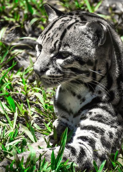 Animal Markings Animal Themes Animals In The Wild Cat Close-up Field Focus On Foreground Grass Hanging Out Happy Hello World Mammal Nature One Animal Outdoors Pets Popular Popular Photos Portrait Relaxation Tiger Wildlife Popular Photo My Favorite Photo Simanovic