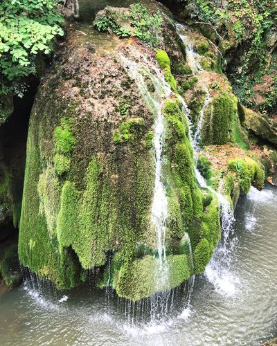 Water Waterfall Beauty In Nature Flowing Water Green Color Tranquility Bigar Romania Cascade Bigar
