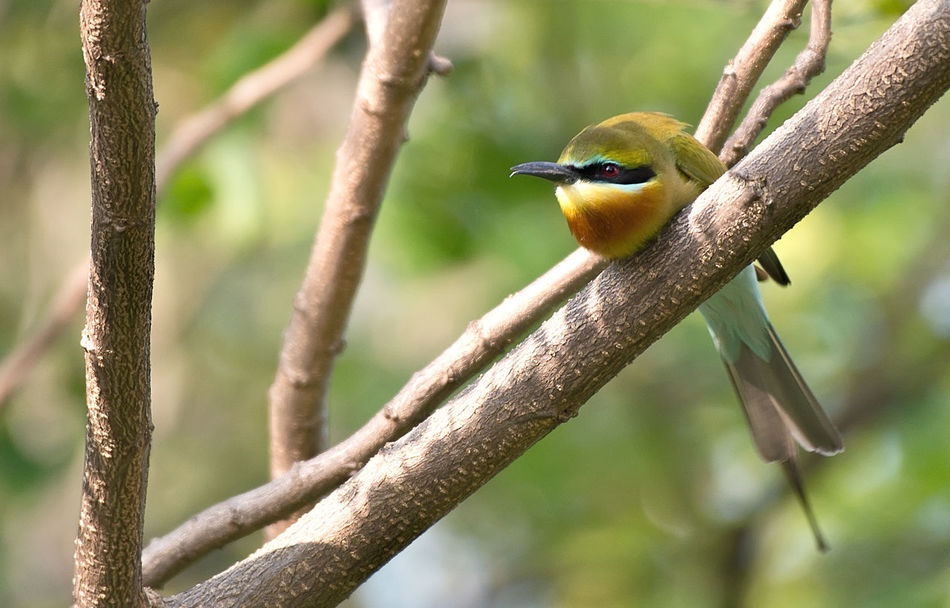 Looks like bee eater is having a bad day. Animal Themes Bad Day Beauty In Nature Bird Branches And Sky Close-up Day Nature Nature Call No People Perching Tired Legs Toilet Call Waiting For You