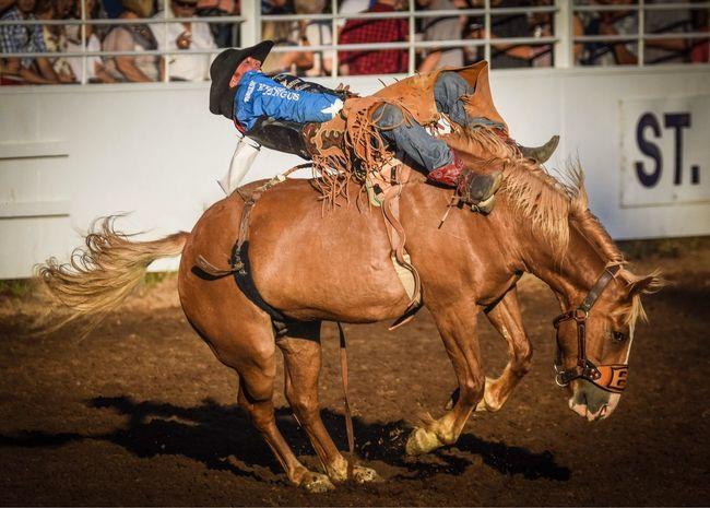 St. Paul Rodeo Horse Animal Themes Mammal Horseback Riding Rodeo Traditional Festival Cowboy
