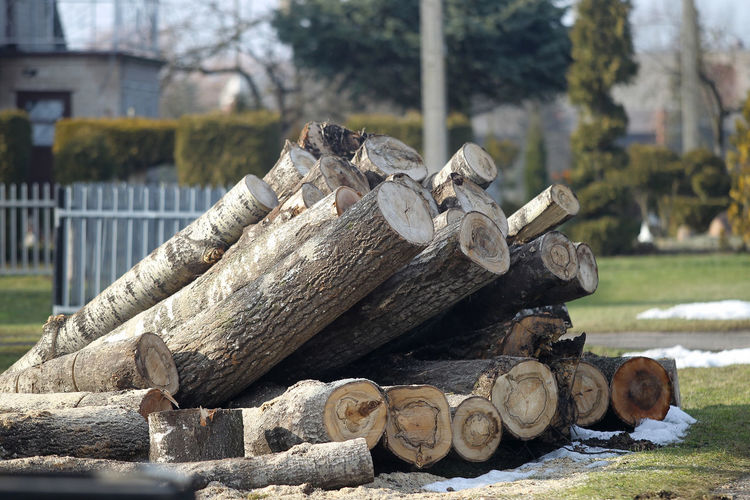Stack of logs against trees