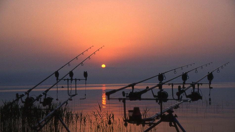 Carpfishing Carpa Bolsenalake Bolsena Water Sea Sunset Nautical Vessel Tree Silhouette Beauty Sun Awe Reflection