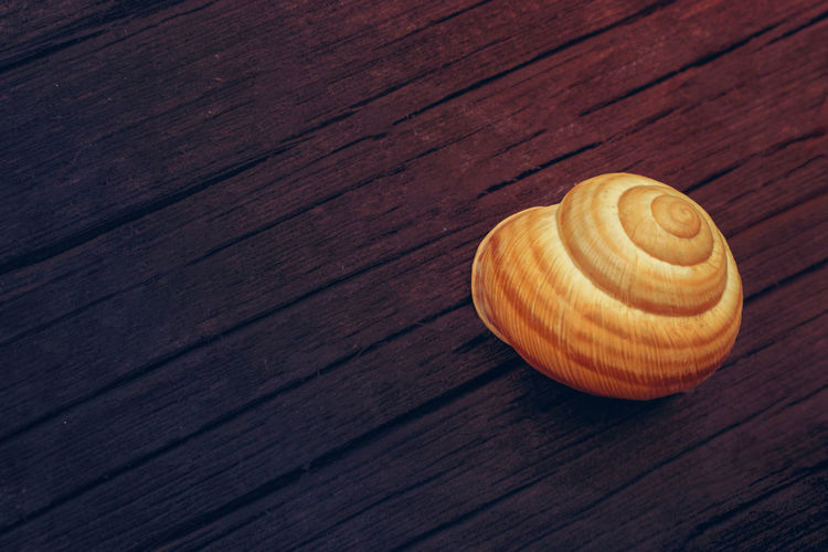 High angle view of shell on wooden table