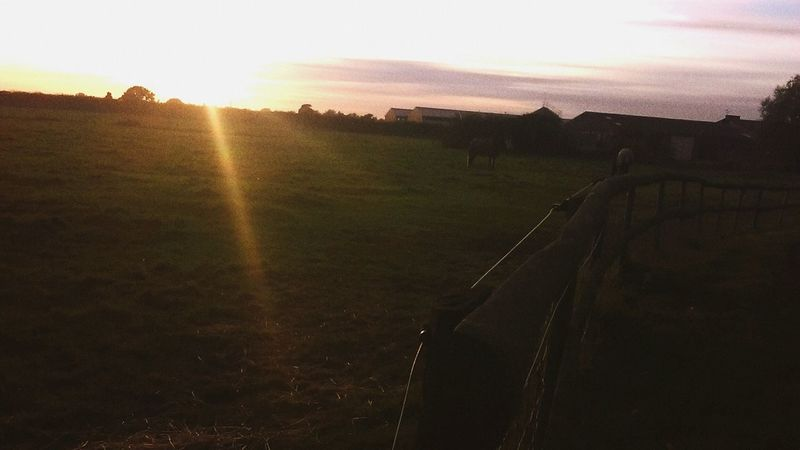 Horses, FarmLife, Sunset_captures, Fieldscape, Enjoying Life, Perfectview