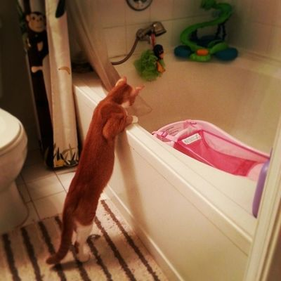 Checking the water running in the bathtub while I prepare the bath for Asia - he grew so long! Kitty Love Cat Nannycat