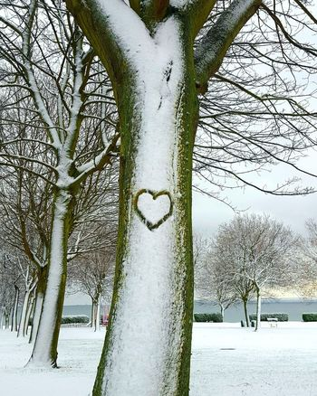 Winter love Love Heart Heart ❤ Scotland Outdoor Photography Trees No Filter No Filters Or Effects Wintertime Snowy Days... Gratitude Inspirational Shades Of Winter Snow Cold Temperature Winter Nature Day Frozen Outdoors No People Tree Beauty In Nature EyeEmNewHere