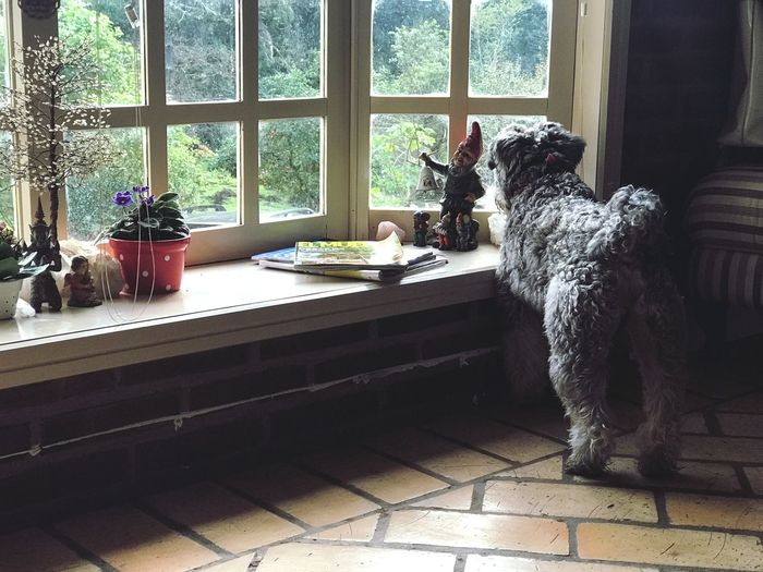 Dog sitting on window sill at home