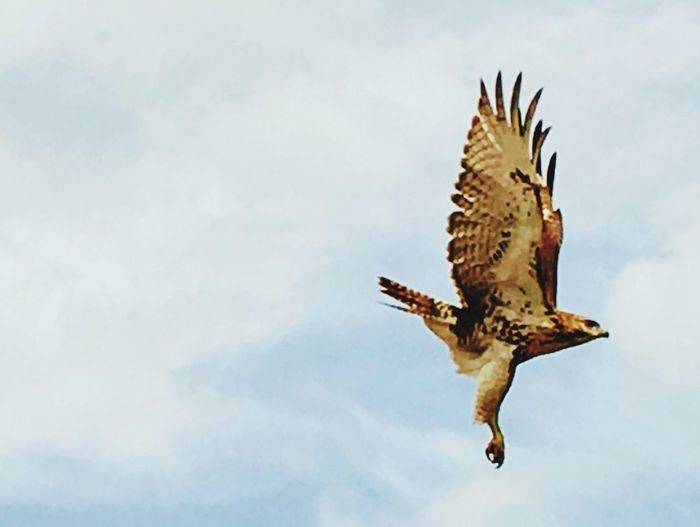 Outside my deck I saw this One Animal Flying Bird