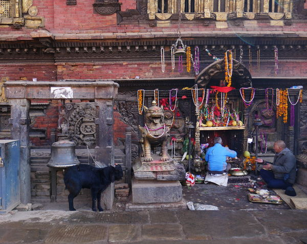 offering a goat Outside Wayofliving Nepal Bhaktapur Temple Offering Animal Goat Colors Traveling Travels Wanderlust Day