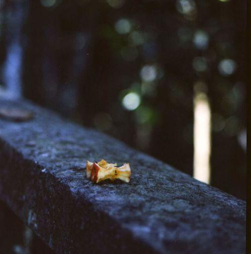 Floresta da Tijuca, leftovers Hasselblad 500CM Film Photography - kodak portra 120mmfilm Brasilien Brazil Hasselblad 500C/M Rio De Janeiro Apple - Fruit Brasil Close-up Film Photography Filmisnotdead Floresta Da Tijuca Middle Format No People Outdoors Urban Forest EyeEmNewHere