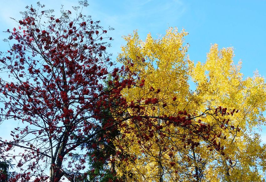 Low Angle View Sky Nature No People Outdoors Growth Day Tree Beauty In Nature