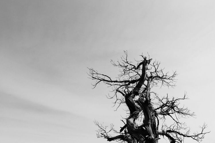 Black And White Friday Branch Bare Tree Low Angle View Tree Trunk Lone Tree Tranquility Nature No People Day Beauty In Nature Sky Outdoors