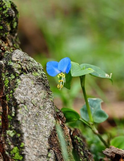 Beauty In Nature Blooming Blue Flower Bokeh Flower Nature Plant