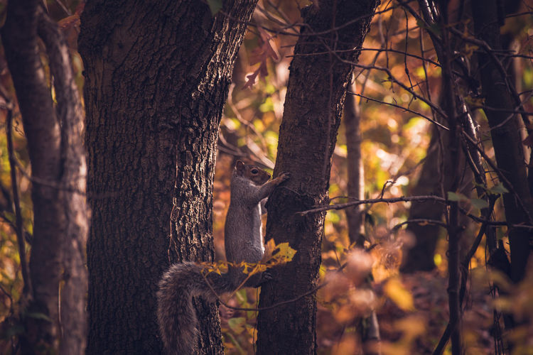 Nature Sunlight Animals In The Wild Beauty In Nature Animal Themes Wildlife Wildlife & Nature Squirrel Beautiful Nature Wildlife Photography Animal Wildlife Animal Photography Nature Photography Autumn Collection Autumn🍁🍁🍁 Nature Beauty In Nature Animals In The Wild