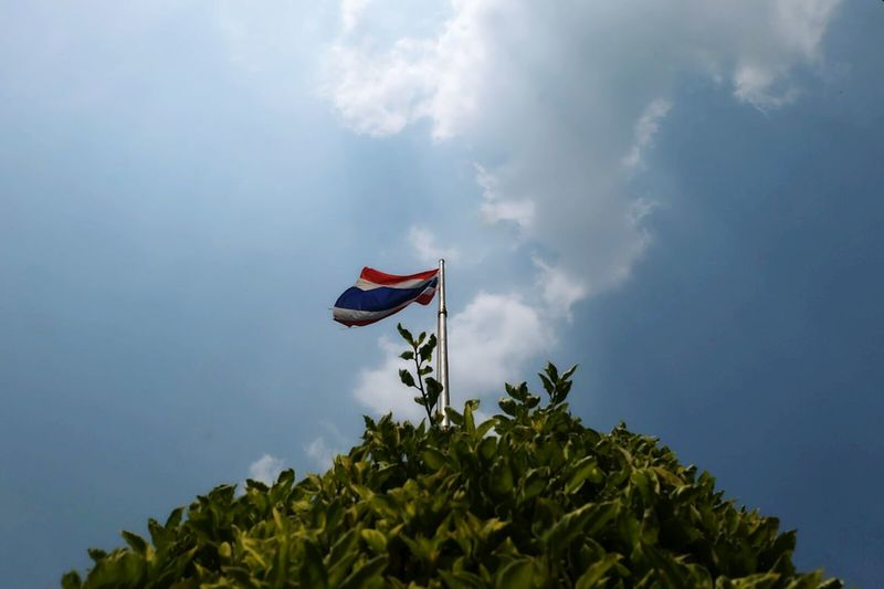 Low angle view of thai flag on tree against sky