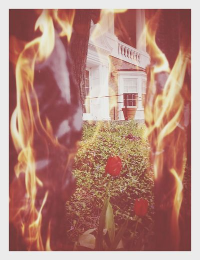 Eternal Flames... Tulips Flowers Plantation House Architecture_collection Fire Mysterious Taking Photos Balconies EyeEm Best Edits Nature On Your Doorstep