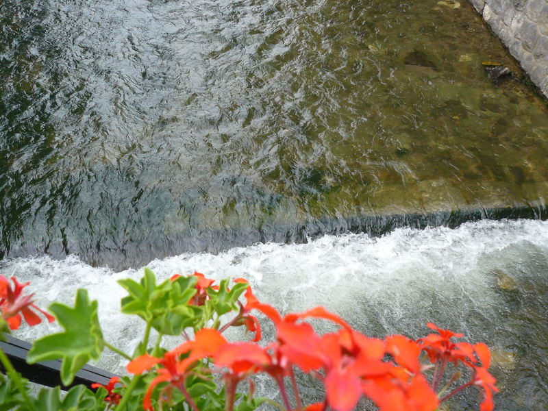 Beauty In Nature Close-up Current Day Flower Flowers Freshness Nature No People Outdoors Rapid Rapids River Red Flower River River Water Water Waterfall Wave