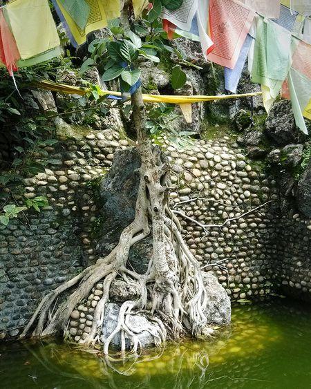 Tree Of Life The Tree Of Life Buddha Buddhism Peace Tadaa Community Eyem Gallery What I Value Roots