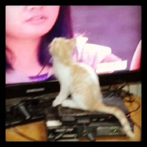 Mybacchu KittyKat WatchingTV Dailysoap follower innocent cute adorable