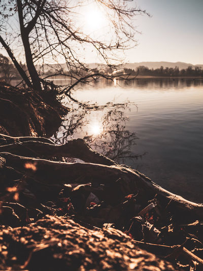 Water Lake Tree Tranquility Tranquil Scene Sky Beauty In Nature Scenics - Nature Nature Reflection No People Lakeshore Non-urban Scene Plant Sunlight Branch Outdoors Idyllic Day