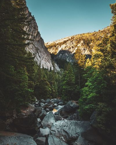 Yosemite National Park EyeEm Selects EyeEm Gallery Plant Tree Nature Sky No People Beauty In Nature Scenics - Nature The Great Outdoors - 2019 EyeEm Awards The Great Outdoors - 2019 EyeEm Awards