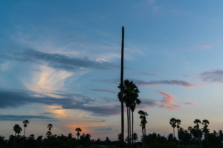 Sky Tree Plant Cloud - Sky Sunset No People Nature Outdoors Orange Color Non-urban Scene