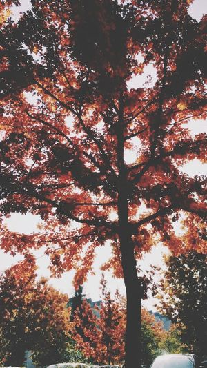 Tree Oak Autumn