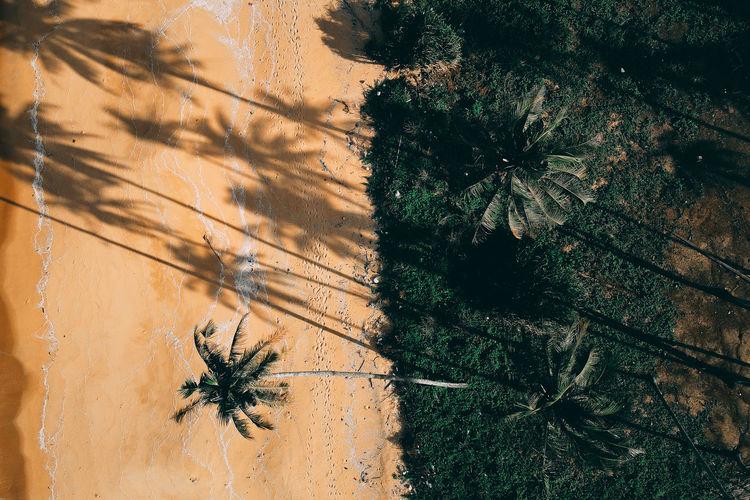 High angle view of palm tree