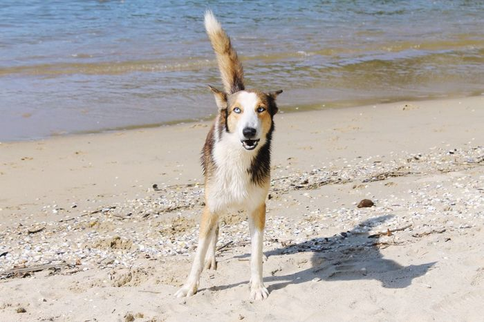 I Love My Dog Pets Wolf Beachphotography Eye4photography  Cute EyeEm Best Shots Dog