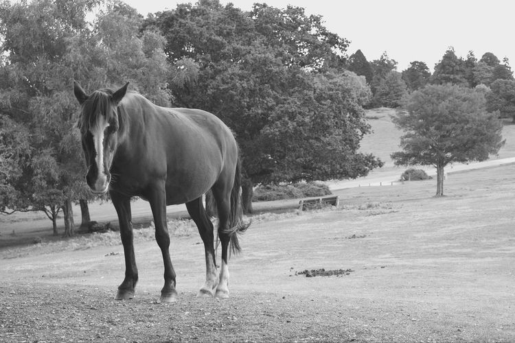 Sad horse searching for attention Blackandwhite Horse Tree Animal Themes Animal Mammal Plant Vertebrate Animal Wildlife Domestic Animals Livestock Nature Day Field One Animal Land Landscape Environment No People Domestic Standing Animals In The Wild