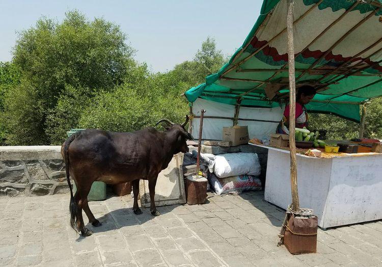 Street Photography Streetphotography India Animals Market Exotic Journey Sojourner