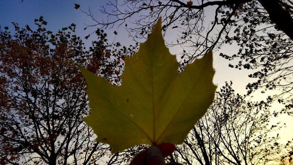 Nature Outdoors Beauty In Nature Close-up Sunset Tree The Places I've Been And The Things I've Seen Autumn🍁🍁🍁 Autumn 2016 November2016 Showcase November It Is Cold Outside Sky Low Angle View Orange Color Skyporn Look What I Found Good Bye Autumn Tree_collection  TreePorn