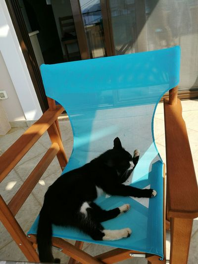 Cat Deck Chair