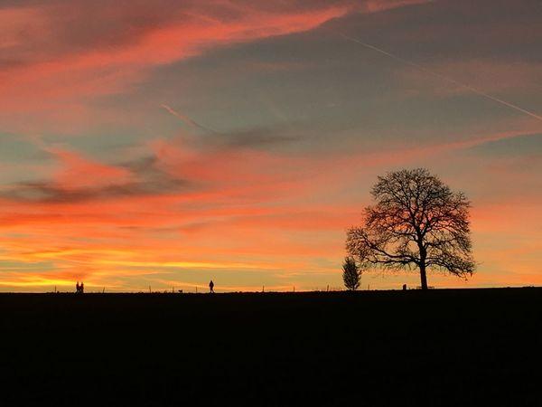 EyeEmNewHere Nature Orange Color Silhouette Sunset Tree