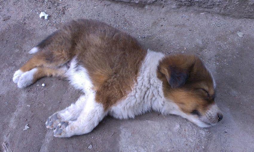 Sleeping Puppy. Sleepingpuppy Adorable Cute Puppy Pet Portraits Brownie EyeEmNewHere