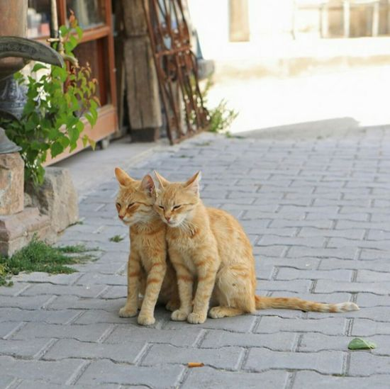 Cat Cat Couple Adorable