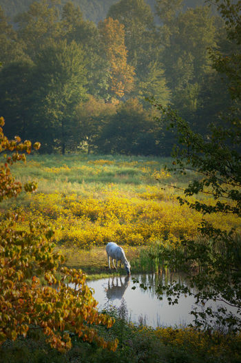 Bird by lake in forest during autumn