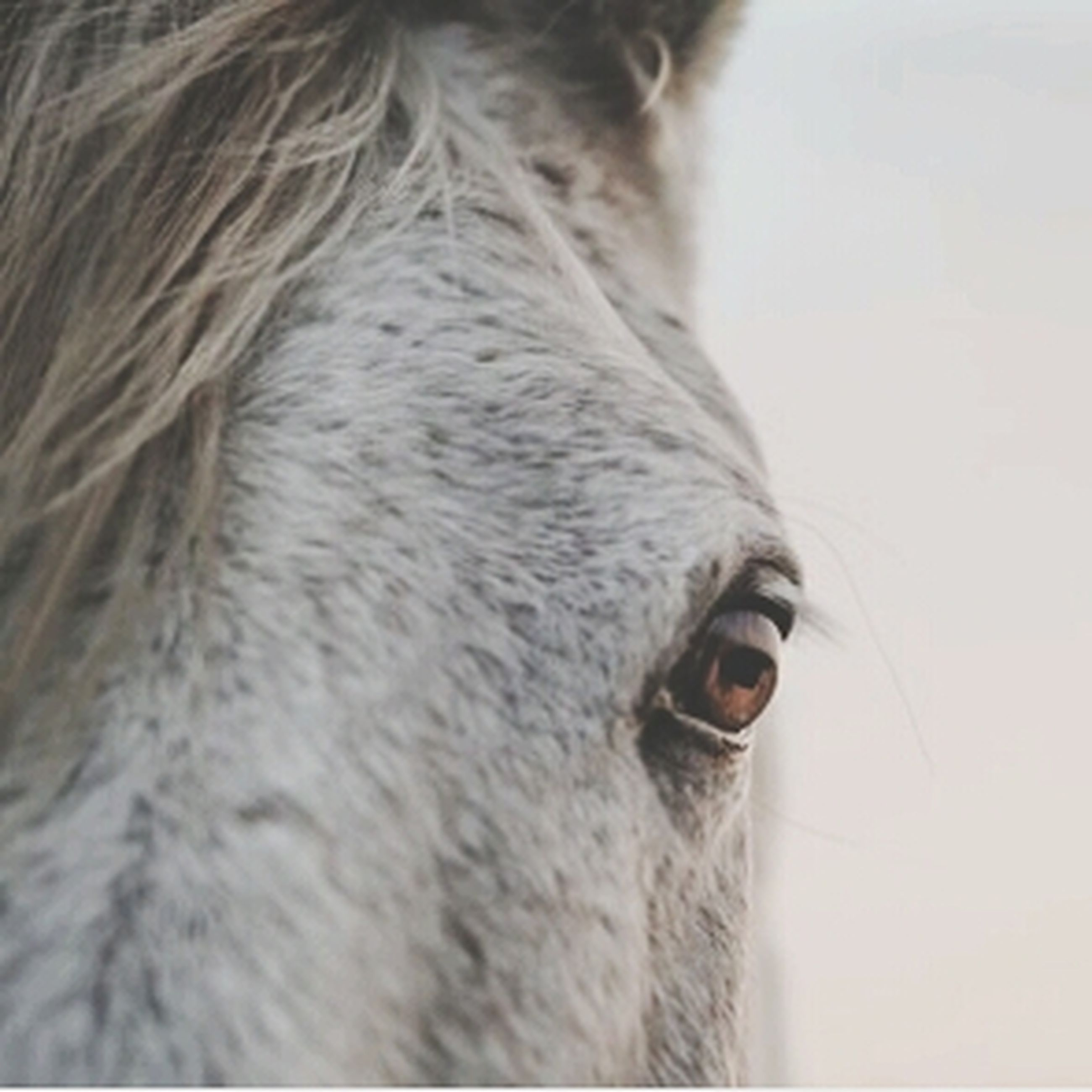 close-up, horse, part of, focus on foreground, cropped, day, animal head, front view, side view, selective focus, animal body part, outdoors, headshot, sunlight, wall - building feature