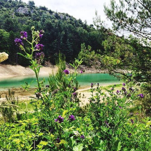 Lake Water View Provence Landscape Flowers Nature Nature_collection Lake View
