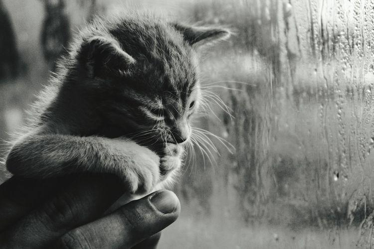 EyeEm Selects Human Hand Pets Domestic Cat Studio Shot Close-up Cat Rainy Season Stray Animal Rain Rainfall Water Drop