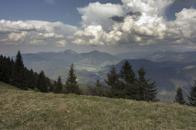 landscape Velka Fatra Beauty In Nature Cloud - Sky Clouds And Sky Coniferous Tree Day Environment Grass Idyllic Land Landscape Mountain Mountain Range Nature No People Non-urban Scene Outdoors Plant Scenics - Nature Sky Tranquil Scene Tranquility Tree Zvolen