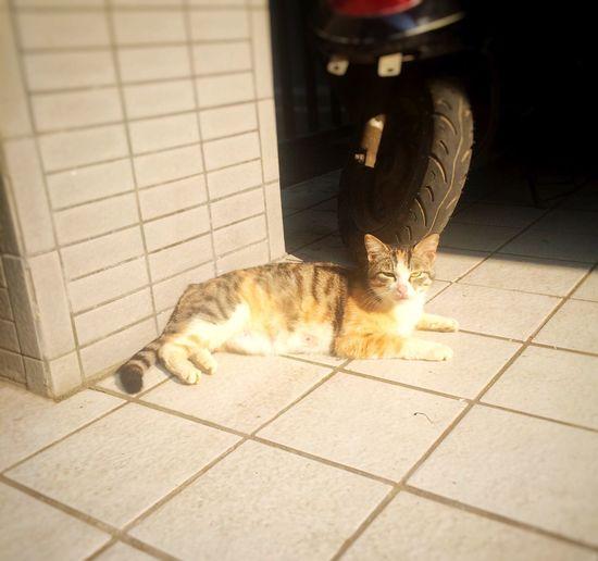 分享一只哺乳期的喵 Sleepy Time Soaking It All In OpenEdit Cat cat
