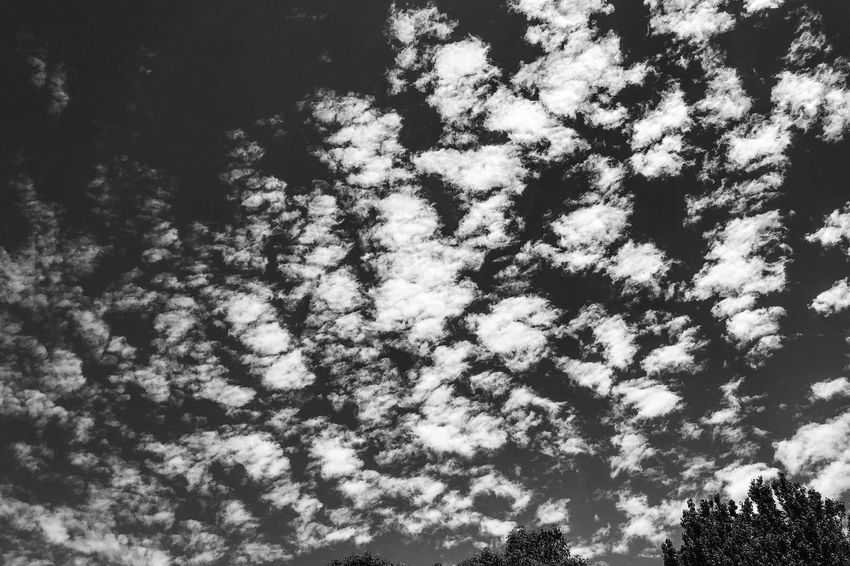 The clouds Light And Shadow Black And White Monochrome Photography Monochrome Clouds And Sky Clouds Cloud Low Angle View Nature Beauty In Nature Sky Tranquility Tree No People Outdoors Day Scenics