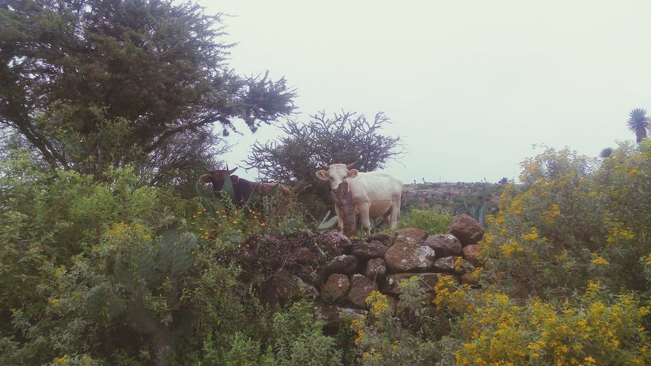 Animal Tree Animal Wildlife Animal Themes No People Cmh CadereytaPuebloMágico Queretaro, Mex. Querétaro Cadereyta Domestic Animals